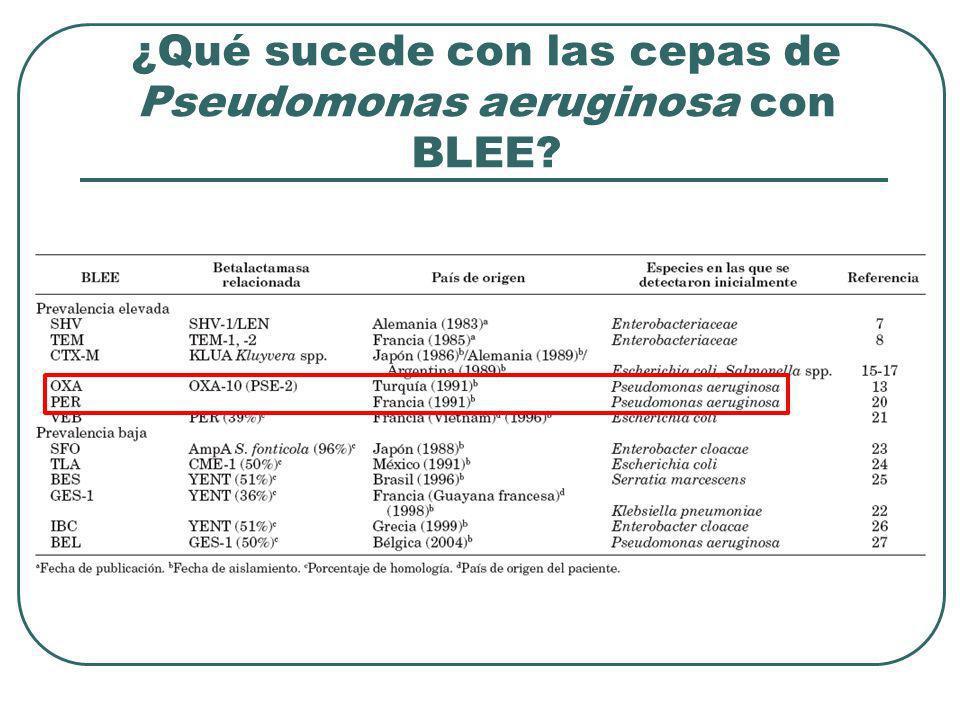 ¿Qué sucede con las cepas de Pseudomonas aeruginosa con BLEE