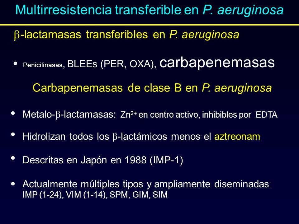 Multirresistencia transferible en P. aeruginosa