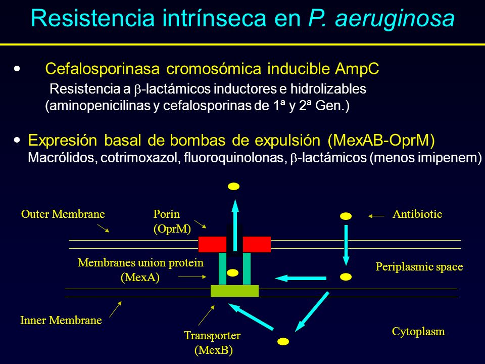 Resistencia intrínseca en P. aeruginosa