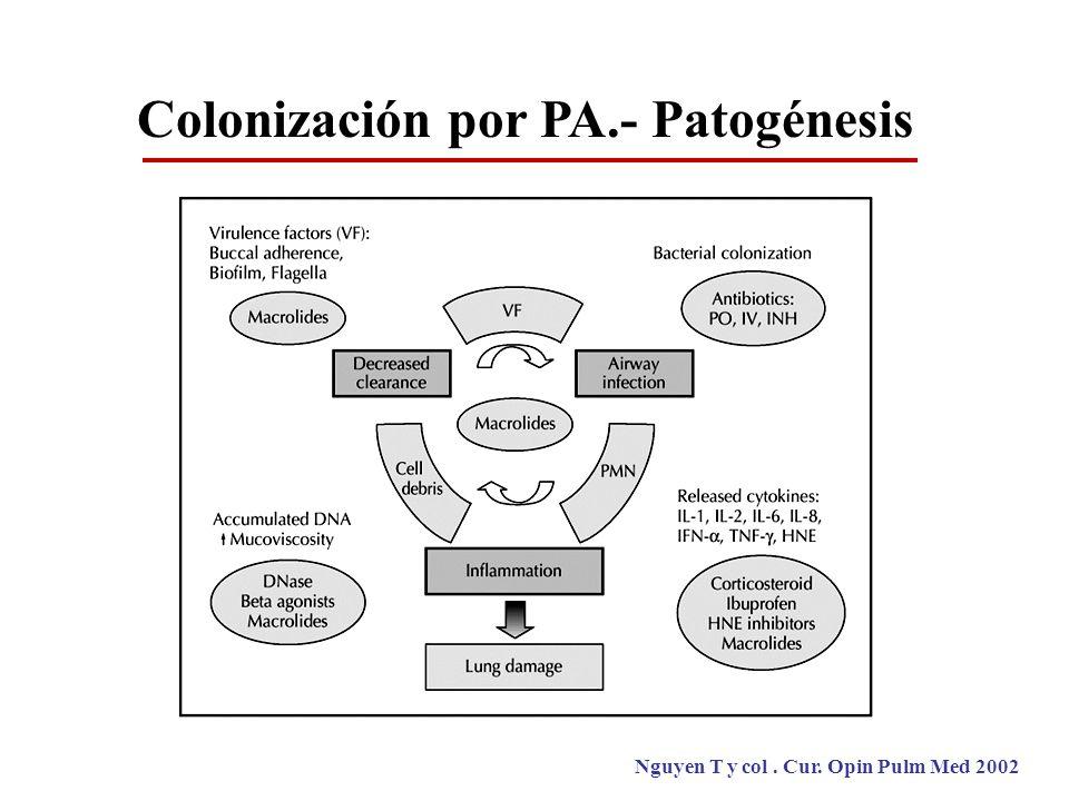 Colonización por PA.- Patogénesis