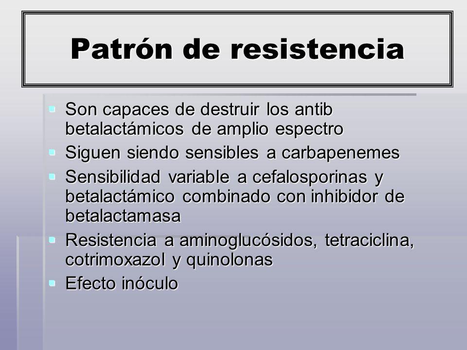 Patrón de resistencia Son capaces de destruir los antib betalactámicos de amplio espectro. Siguen siendo sensibles a carbapenemes.