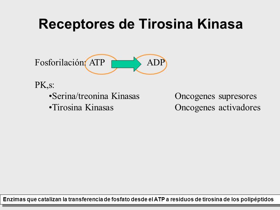 Receptores de Tirosina Kinasa