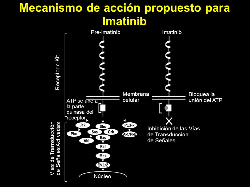 Mecanismo de acción propuesto para Imatinib