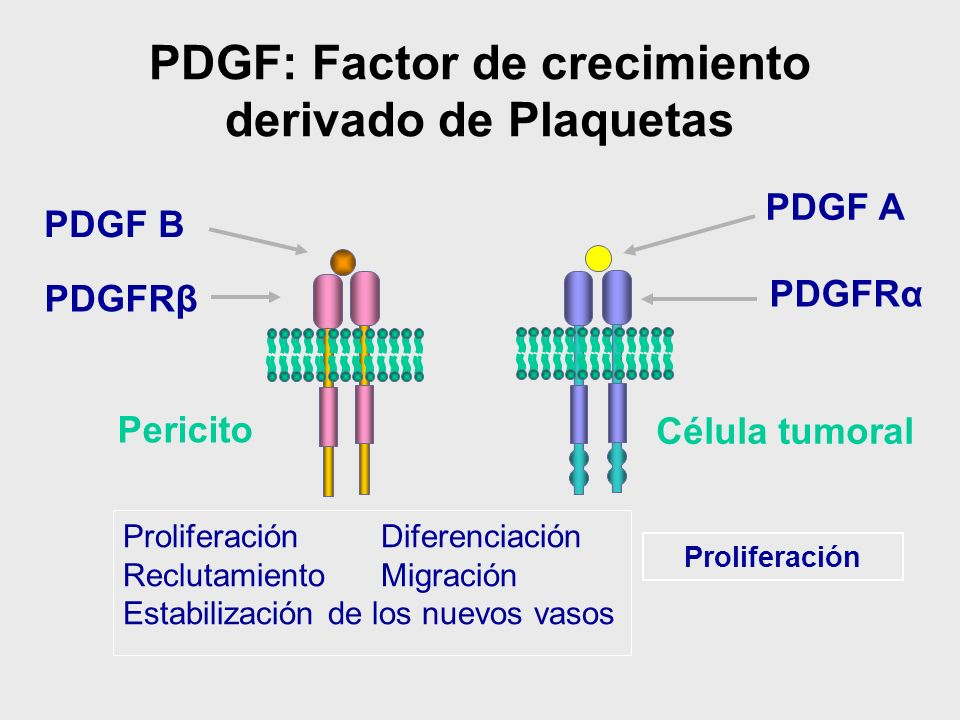 PDGF: Factor de crecimiento derivado de Plaquetas