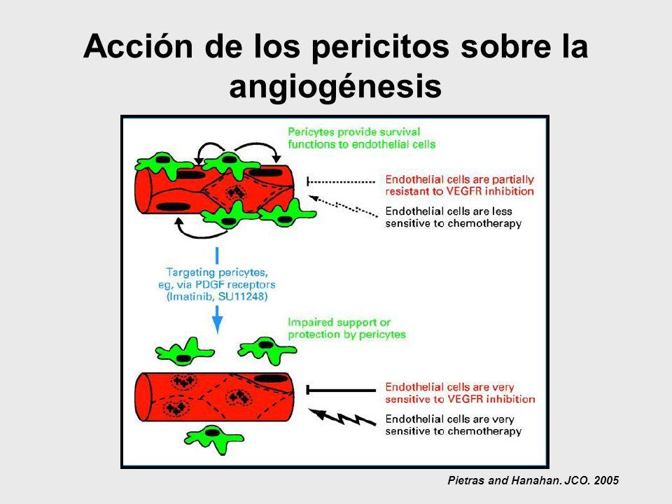 Acción de los pericitos sobre la angiogénesis