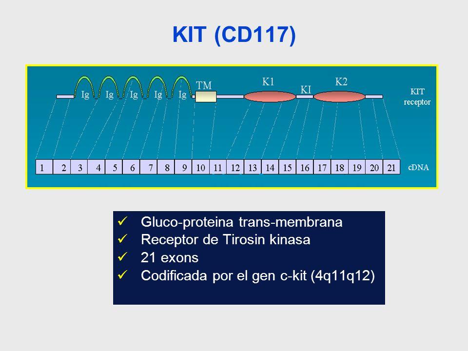 KIT (CD117) Gluco-proteina trans-membrana Receptor de Tirosin kinasa