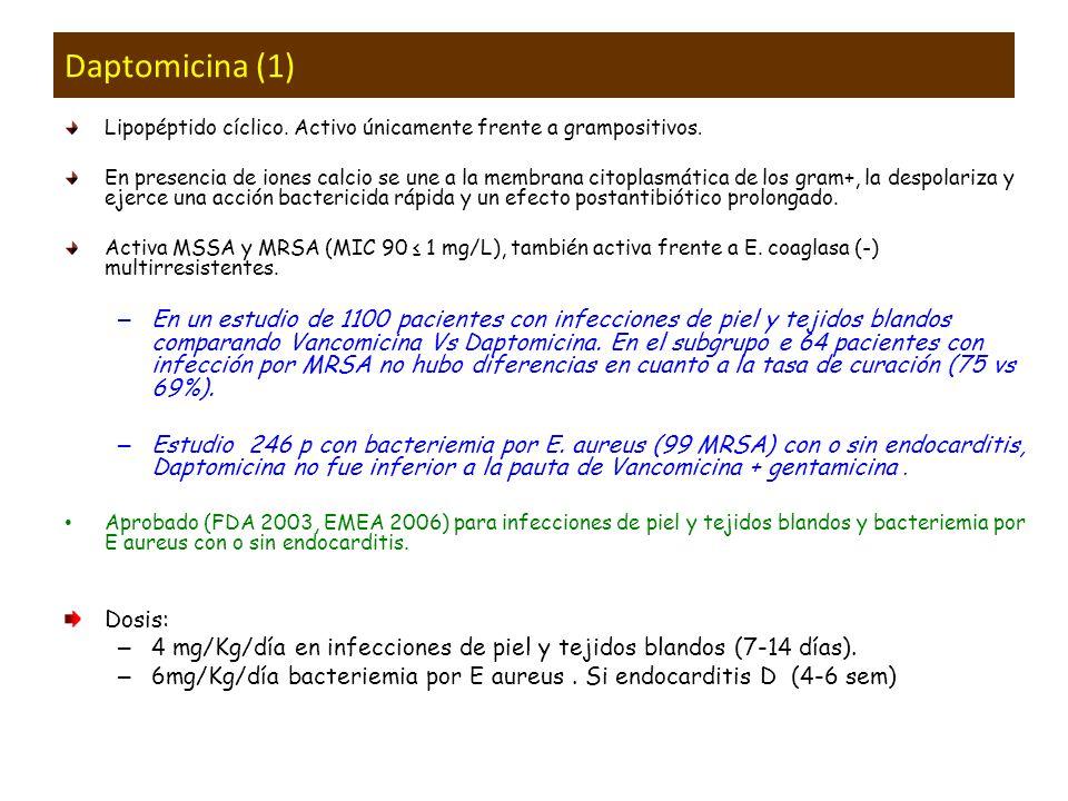 Daptomicina (1) Lipopéptido cíclico. Activo únicamente frente a grampositivos.