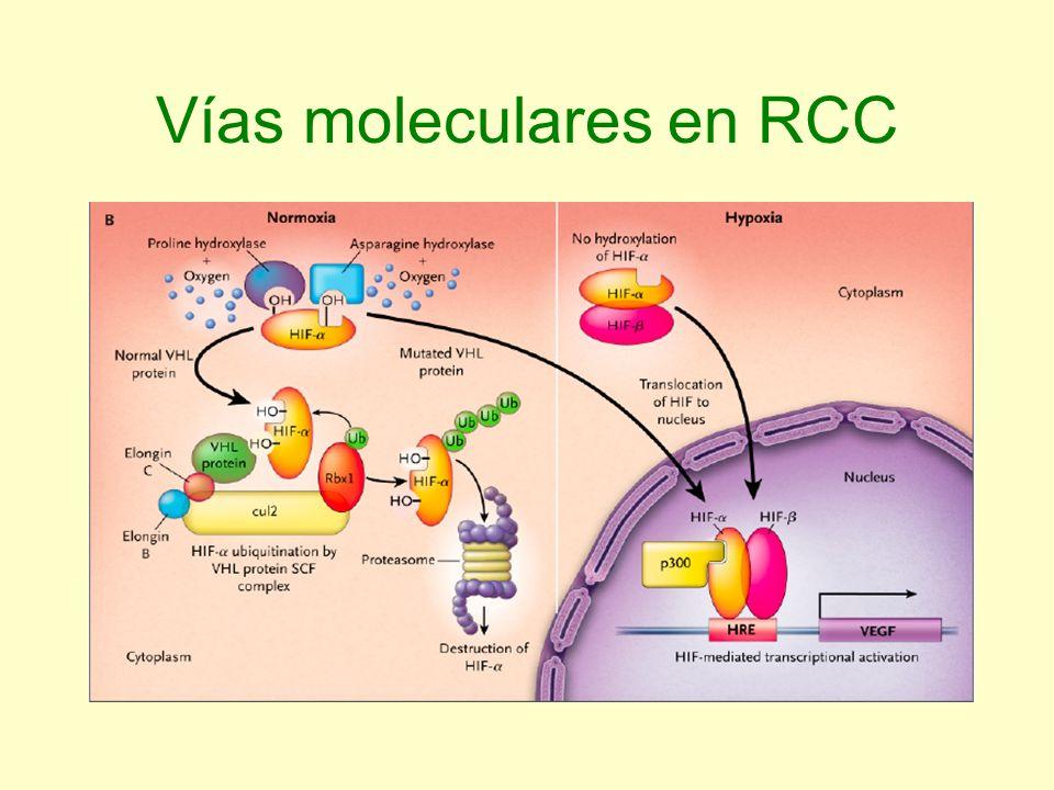 Vías moleculares en RCC