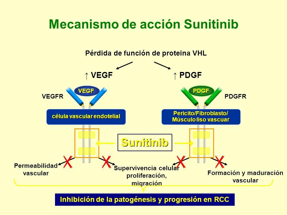 Mecanismo de acción Sunitinib