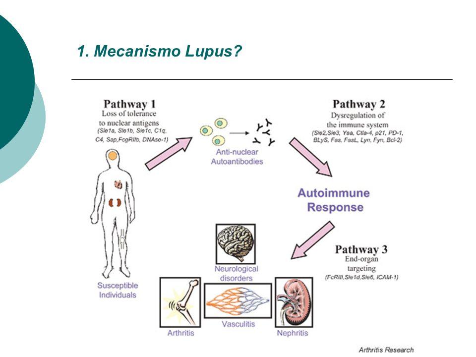 1. Mecanismo Lupus