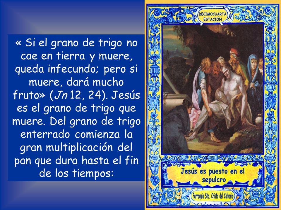« Si el grano de trigo no cae en tierra y muere, queda infecundo; pero si muere, dará mucho fruto» (Jn 12, 24).