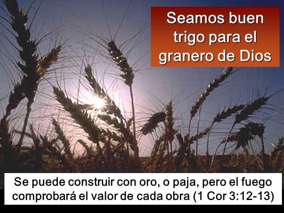 Seamos buen trigo para el granero de Dios