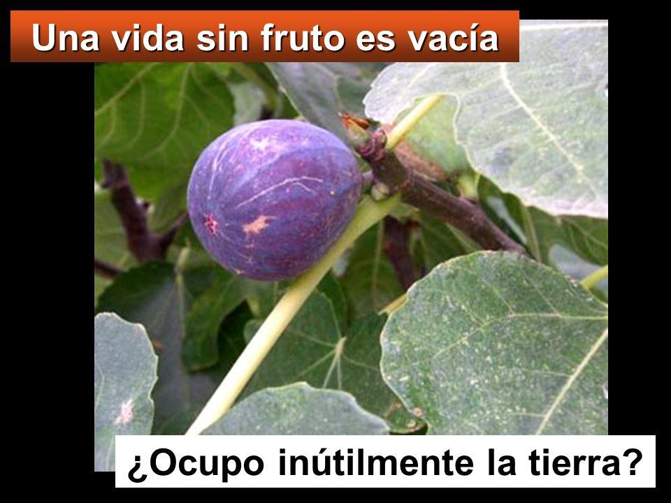 Una vida sin fruto es vacía ¿Ocupo inútilmente la tierra