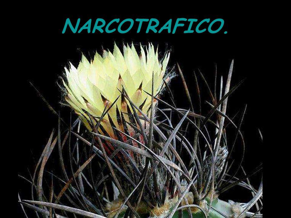 NARCOTRAFICO. 2 27