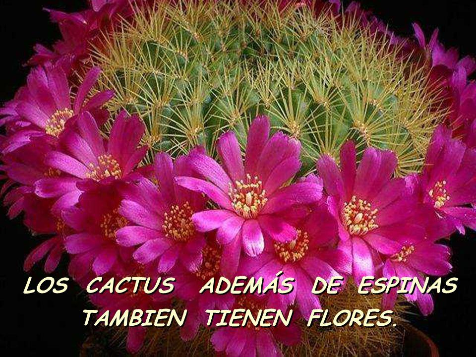 LOS CACTUS ADEMÁS DE ESPINAS TAMBIEN TIENEN FLORES.