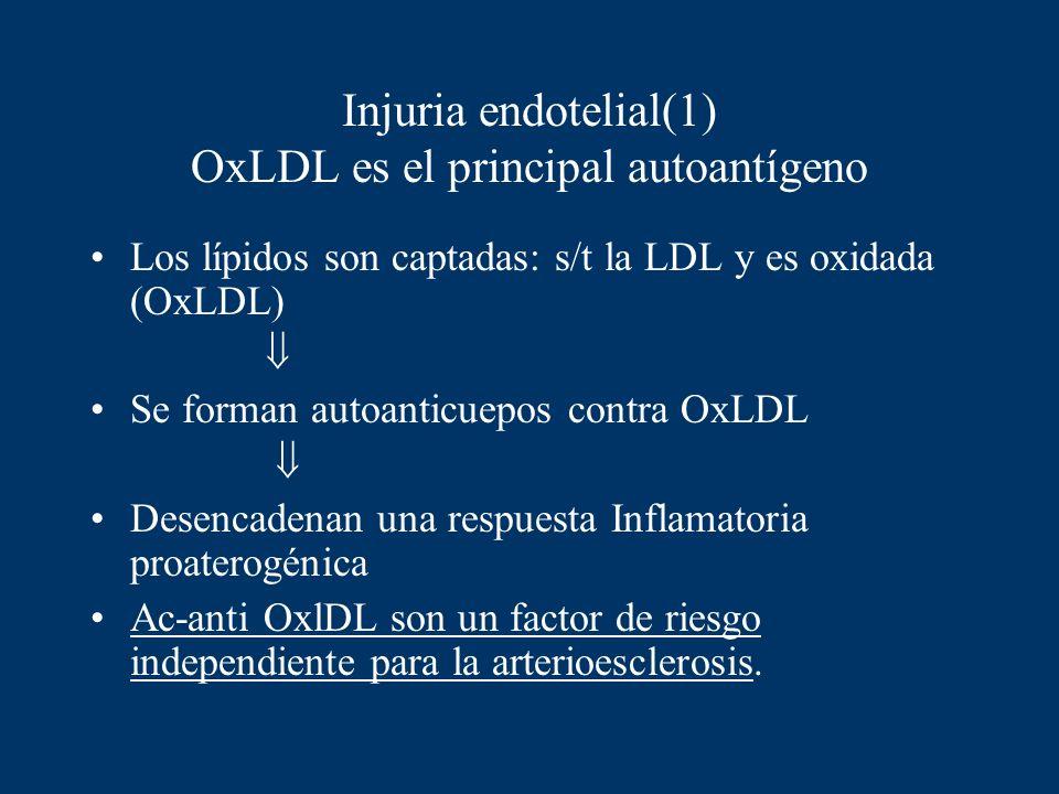 Injuria endotelial(1) OxLDL es el principal autoantígeno