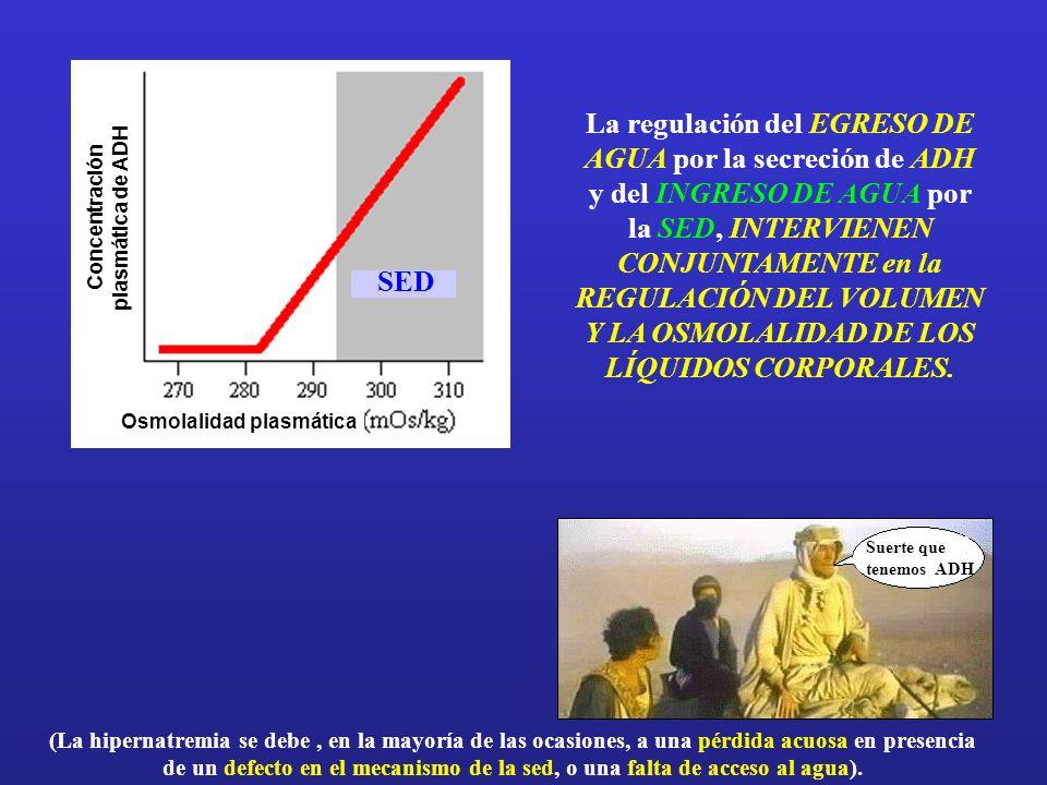 Concentración plasmática de ADH