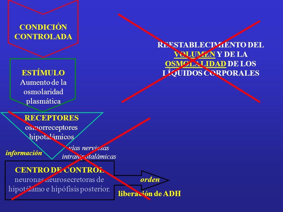 Aumento de la osmolaridad plasmática