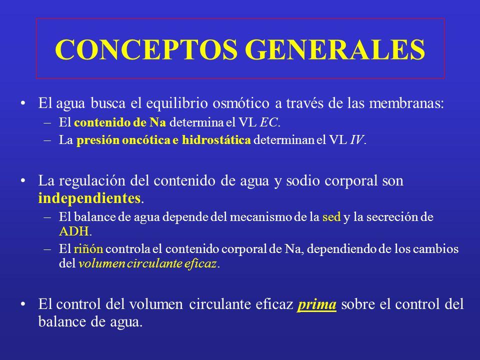 CONCEPTOS GENERALES El agua busca el equilibrio osmótico a través de las membranas: El contenido de Na determina el VL EC.