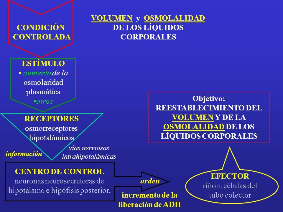 VOLUMEN y OSMOLALIDAD DE LOS LÍQUIDOS CORPORALES