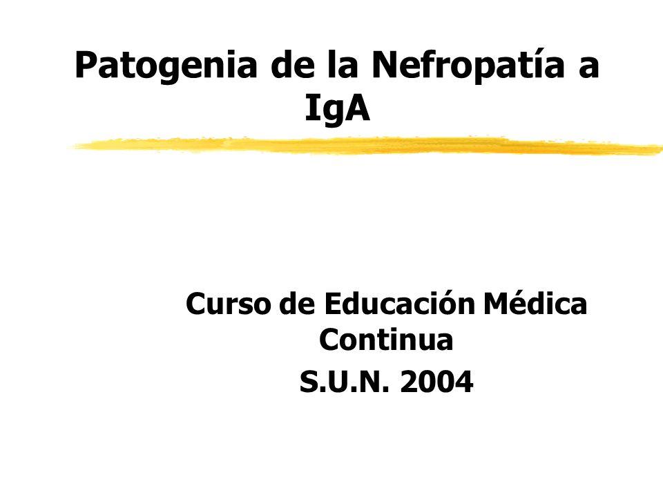 Patogenia de la Nefropatía a IgA