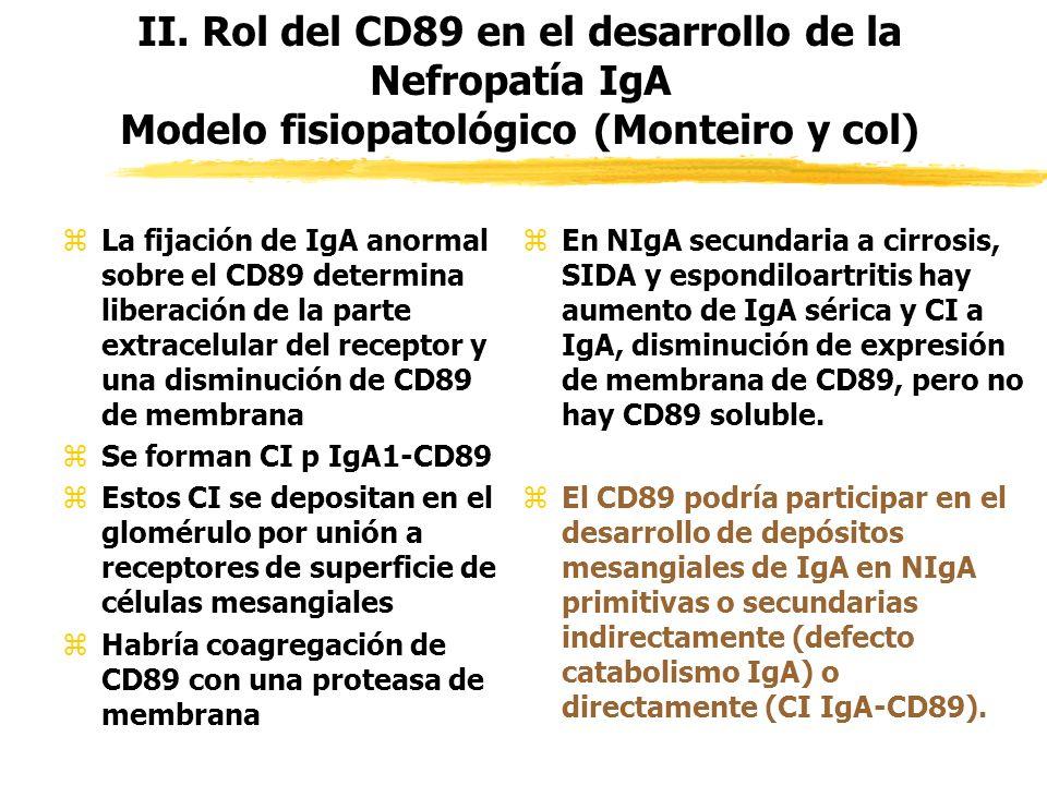 II. Rol del CD89 en el desarrollo de la Nefropatía IgA Modelo fisiopatológico (Monteiro y col)
