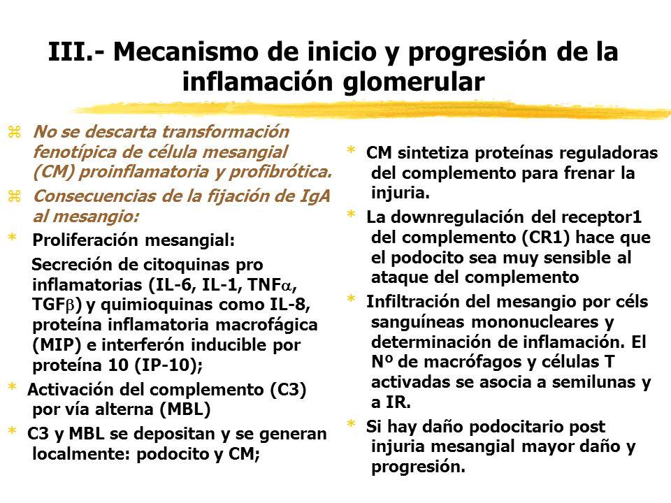 III.- Mecanismo de inicio y progresión de la inflamación glomerular