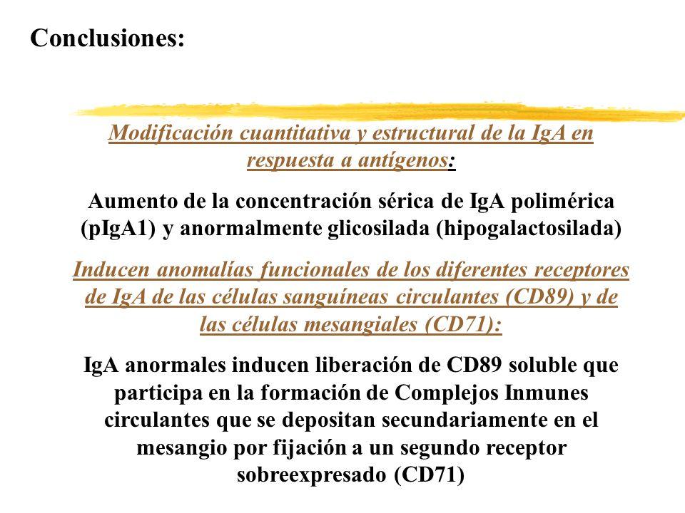 Conclusiones: Modificación cuantitativa y estructural de la IgA en respuesta a antígenos: