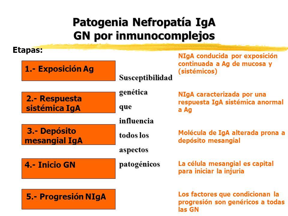 Patogenia Nefropatía IgA GN por inmunocomplejos