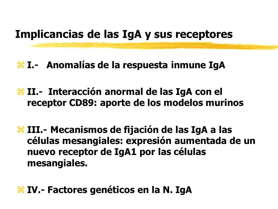 Implicancias de las IgA y sus receptores