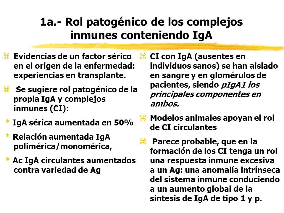 1a.- Rol patogénico de los complejos inmunes conteniendo IgA