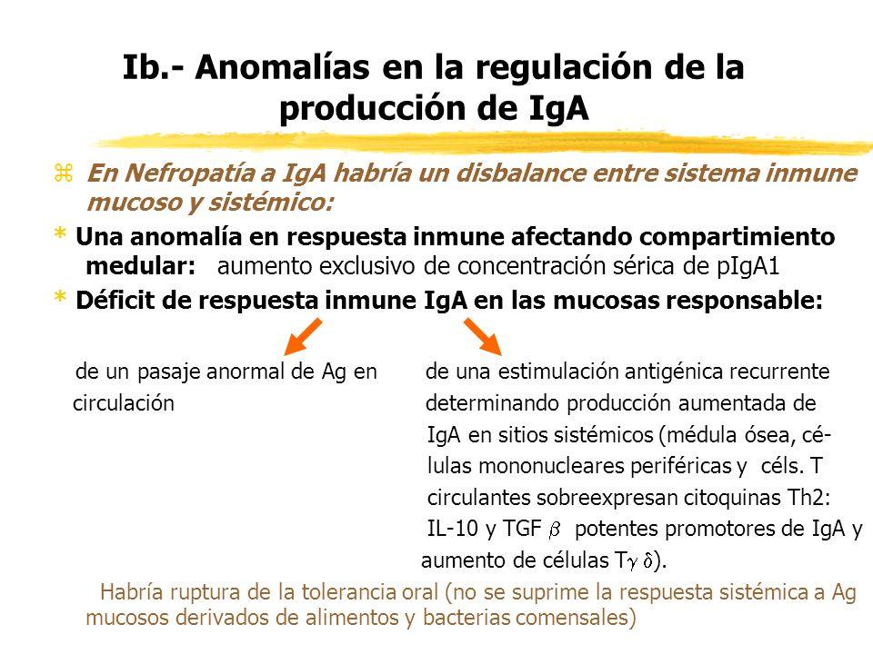 Ib.- Anomalías en la regulación de la producción de IgA