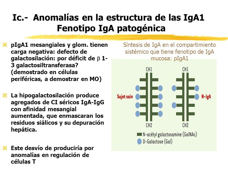 Ic.- Anomalías en la estructura de las IgA1 Fenotipo IgA patogénica