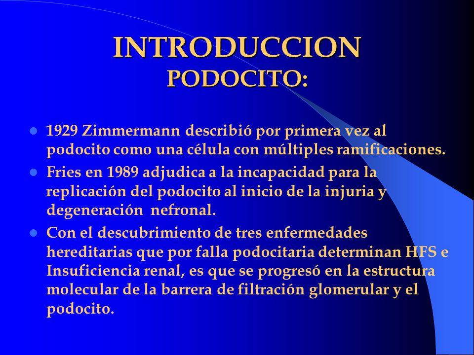 INTRODUCCION PODOCITO: