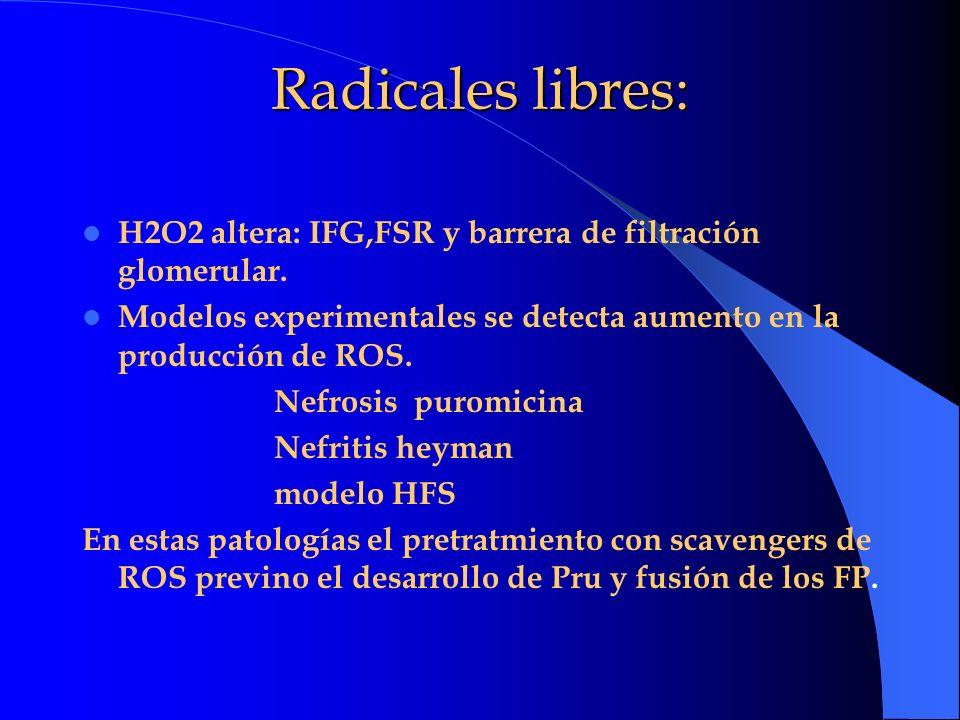 Radicales libres:H2O2 altera: IFG,FSR y barrera de filtración glomerular. Modelos experimentales se detecta aumento en la producción de ROS.