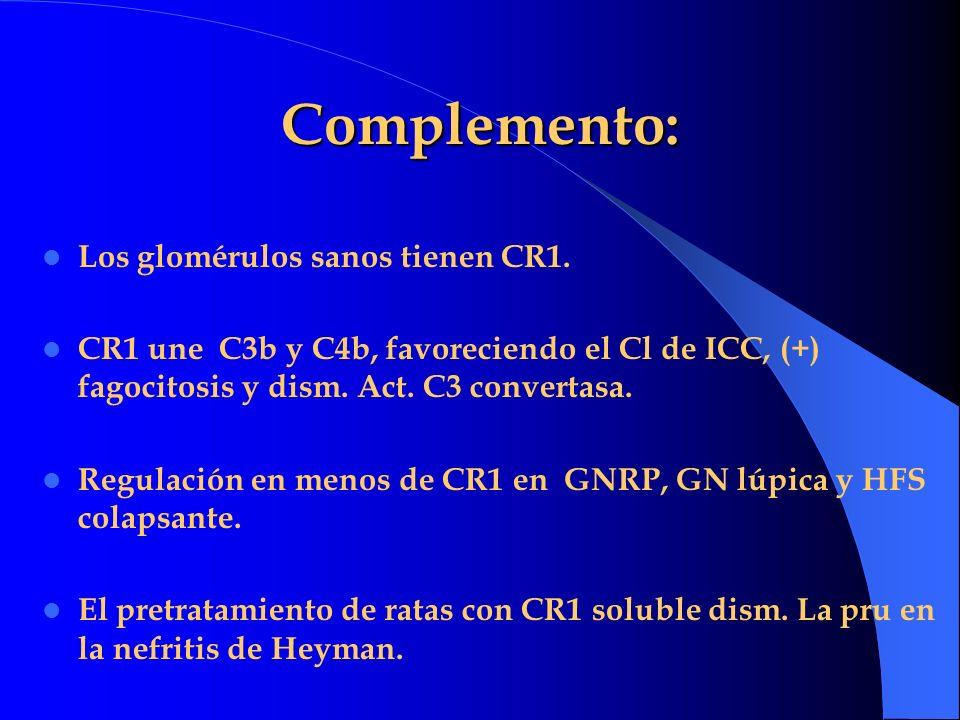 Complemento: Los glomérulos sanos tienen CR1.