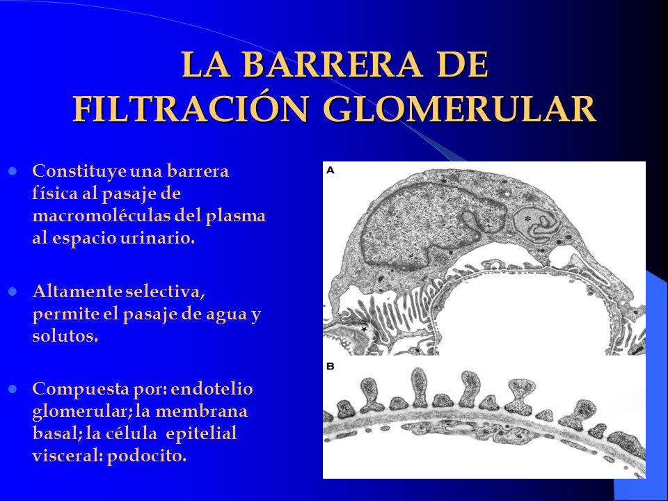 LA BARRERA DE FILTRACIÓN GLOMERULAR