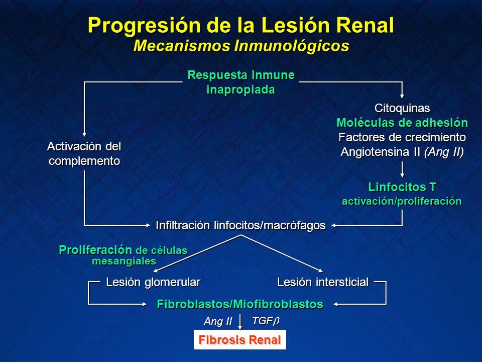 Progresión de la Lesión Renal Mecanismos Inmunológicos