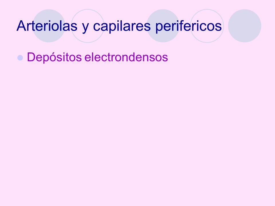 Arteriolas y capilares perifericos