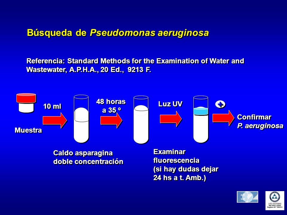 Búsqueda de Pseudomonas aeruginosa