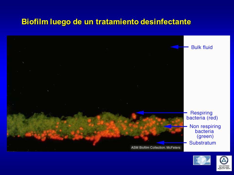 Biofilm luego de un tratamiento desinfectante
