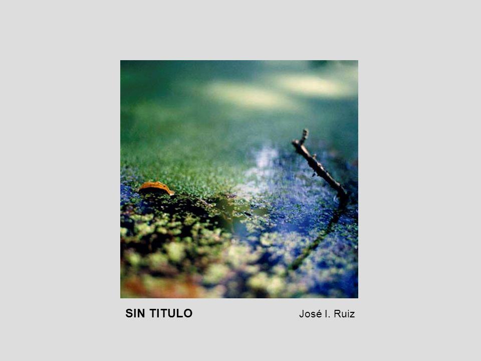 SIN TITULO José I. Ruiz