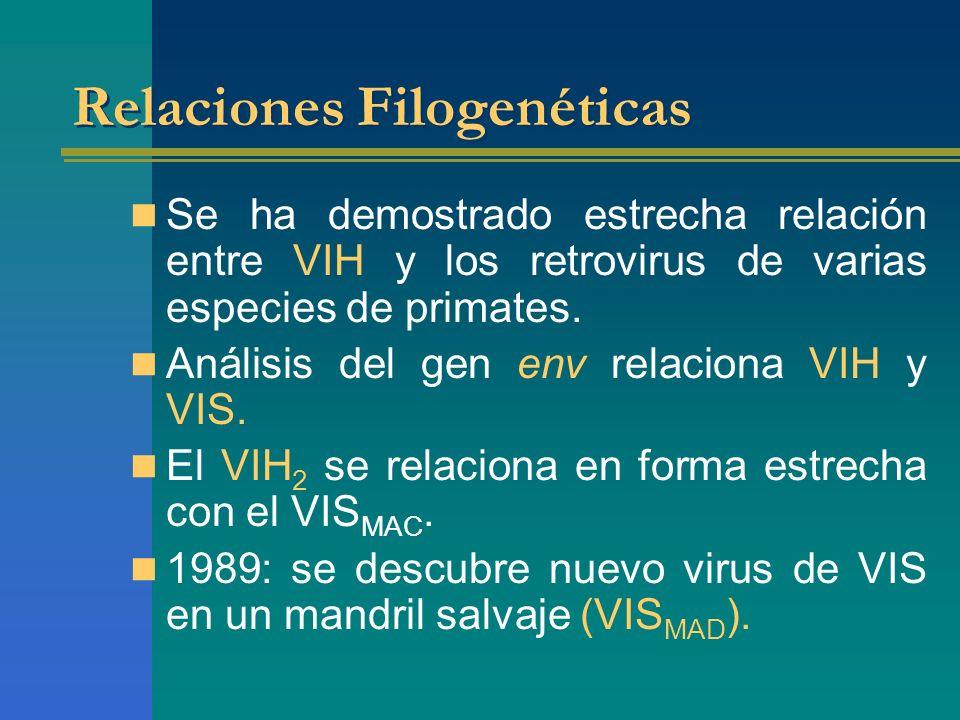 Relaciones Filogenéticas