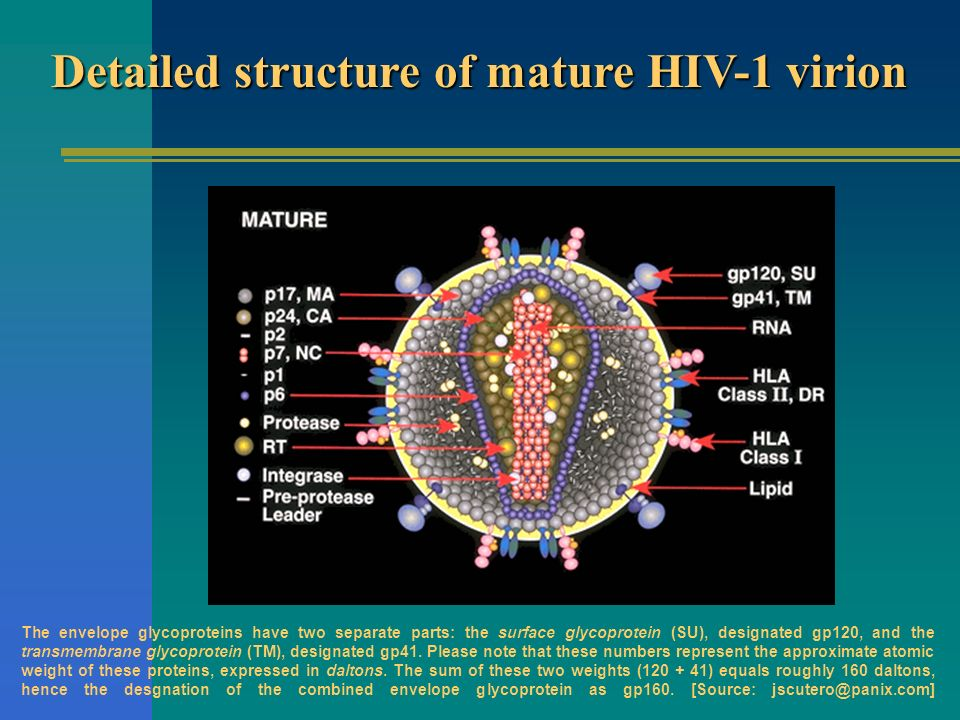 Detailed structure of mature HIV-1 virion
