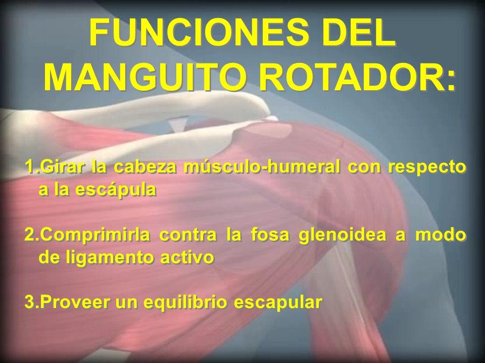 FUNCIONES DEL MANGUITO ROTADOR: