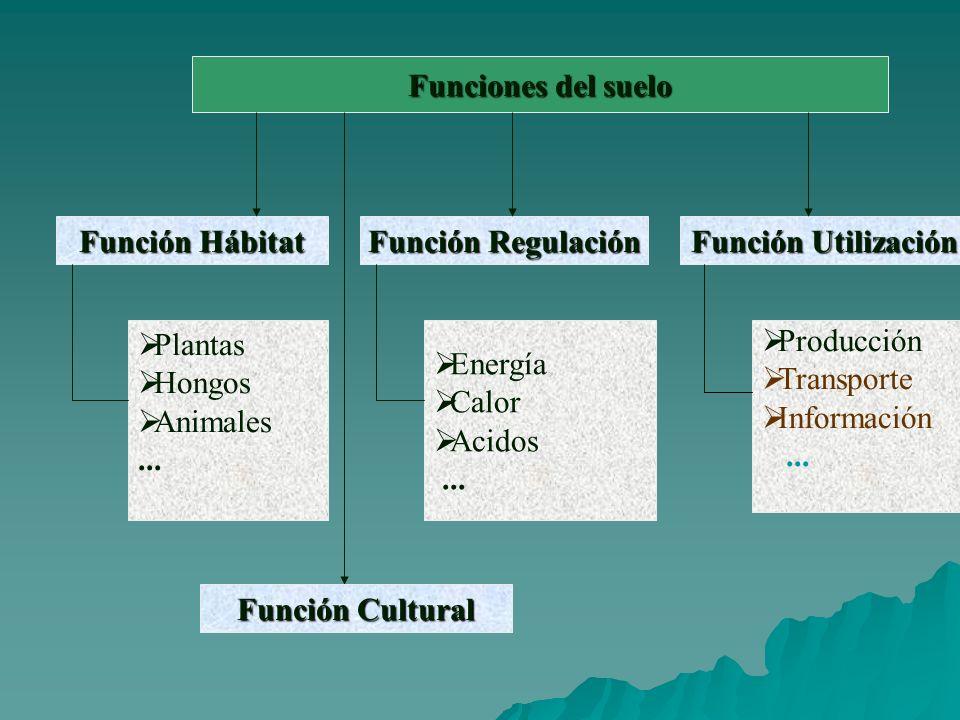 Funciones del suelo Función Hábitat. Función Regulación. Función Utilización. Plantas. Hongos. Animales.