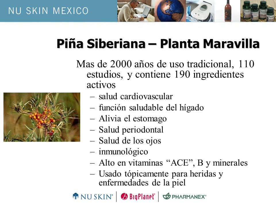 Piña Siberiana – Planta Maravilla