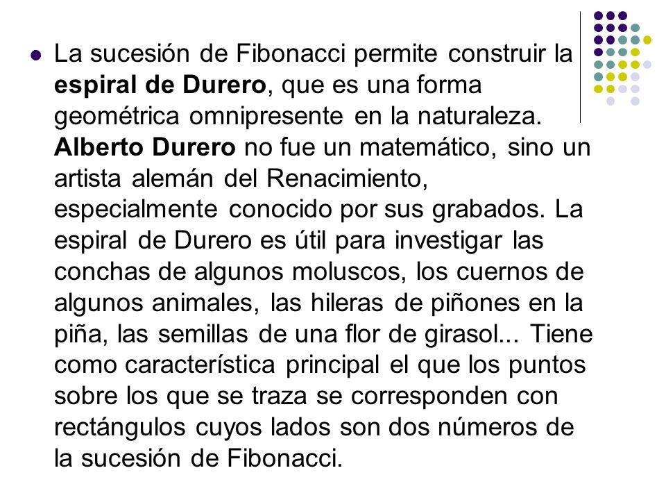 La sucesión de Fibonacci permite construir la espiral de Durero, que es una forma geométrica omnipresente en la naturaleza.