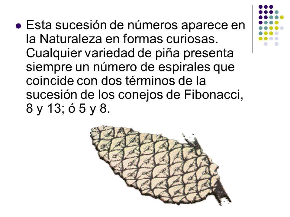 Esta sucesión de números aparece en la Naturaleza en formas curiosas