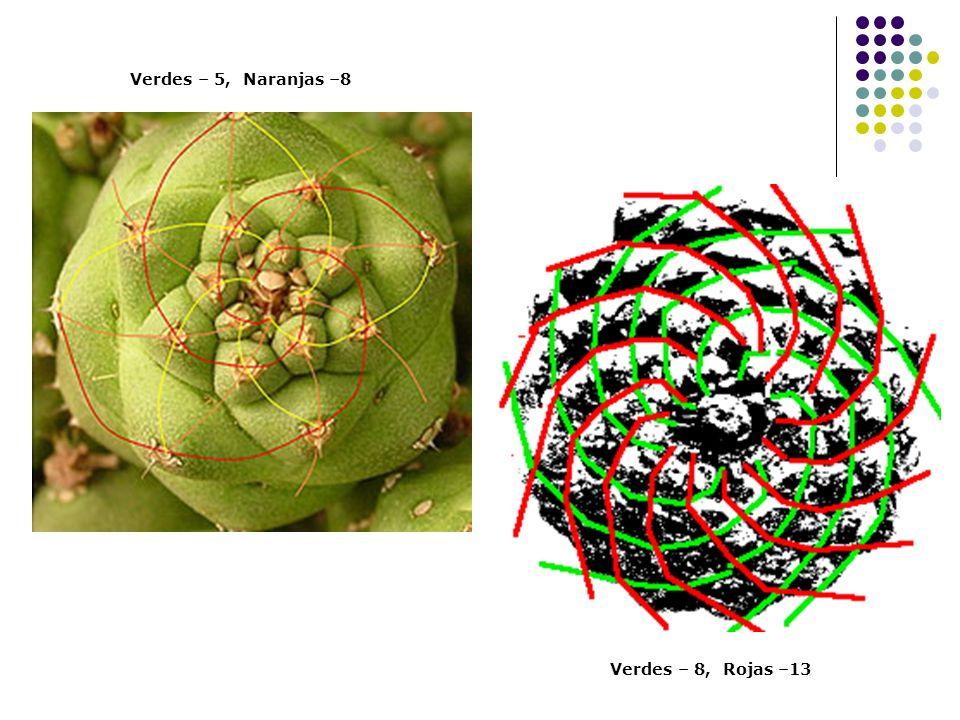 Verdes – 5, Naranjas –8 Verdes – 8, Rojas –13